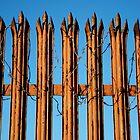 Rusty Fence by Manuel Gonçalves