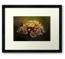 The seed-bearing part of a plant Framed Print