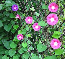 Chain link Flowers by Alberto  DeJesus
