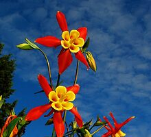 Blue Skies & Columbine by Tori Snow