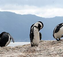 Three wise penguins by Elizabeth Kendall