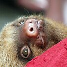 Baby sloth by meta