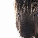 Shetland pony with ice in mane by Frances Taylor