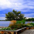 View  Manasquan Reservoir   by Rick  Todaro