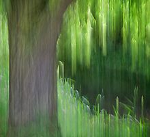 Weeping Willow Tree, Norfolk by DaveTurner