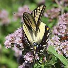 Monarch Butterfly by Bixie