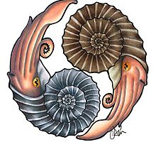 Ammonites by Asia Wiseley