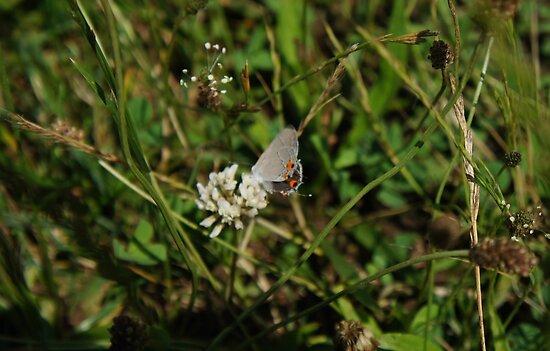 Moth by Jessica Liatys