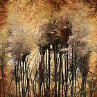 Feathery by Margi