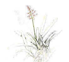 Bromeliad by alisonboldys