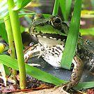 Hidden in Plain Sight by sillyfrog