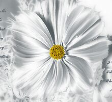 Silver Lining by Gail Bridger