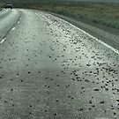 Mormon Crickets On The Move - Lander County, NV by Rebel Kreklow