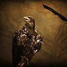 Young Bald Eagle by swaby