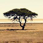 Deserted Tree II by Matthew Pugh