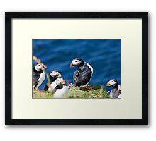 King Puffin Framed Print