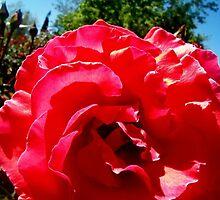 LoLa in Bloom by BingoStar