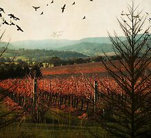 Autumn in the Vines by Margi