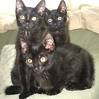 FIV Kittens by Tramper