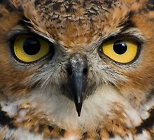 Owl Eyes by Pixie Copley LRPS