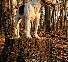 Jack on the Stump by Sue Coppola