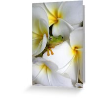 Frangipani Dreaming - Award Winner Greeting Card