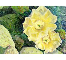 Yellow Prickly Pear Blossoms Photographic Print