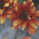 orange floral by lisjen