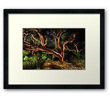 Red Gums Lightpainted Framed Print