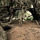 Ancient Yew Tree 2 by Photogothica