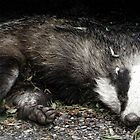 Roadkill Badger by Photogothica