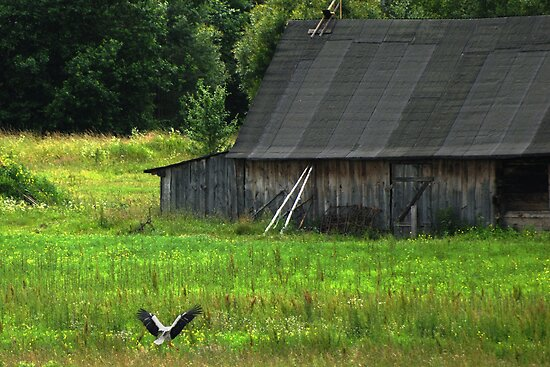Stork is farmstead friend by Antanas
