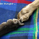 Paws for thought by Sally J Hunter