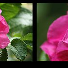 Pink Flowers by Nick Martin