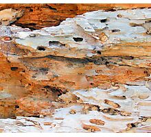 Nature Recycling Nature No. 1 Photographic Print