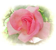 Sweet and Pink Photographic Print