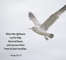 Seagull and Psalm 34:17 by Corri Gryting Gutzman