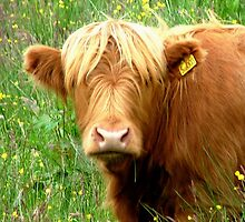Buttercup says ' Who said beefburger ?'............ by Roy  Massicks