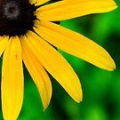 Perfect Nature Closeup  by DearMsWildOne