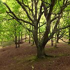 Beech Wood In Spring by Photogothica
