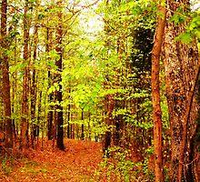 A Walk Alone In The Woods by wordsplaytoday