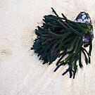 Low Tide by Odille Esmonde-Morgan