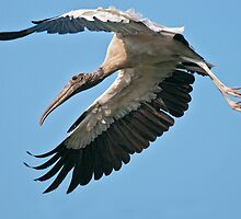 Mr. Stork, where's the baby? by Bonnie T.  Barry