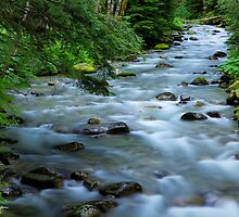 Hatchery Creek by Doug Keech