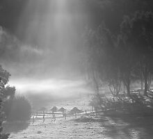 farmscapes #90, shone upon by stickelsimages