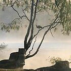 Mist on the Murray tree,Paringa,S.A. by elphonline
