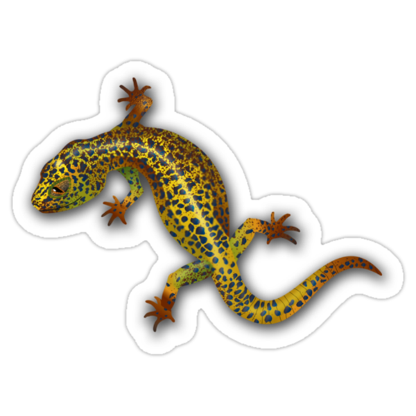 Gecko Web Design by Cathie Tranent