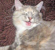 cute kitten smiling  by liza scott