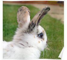 cute baby rabbit Poster