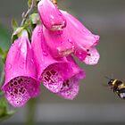 Foxglove Bee by Nicholas Jermy
